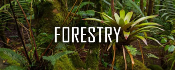 Rainforest Allicance【Forestry】